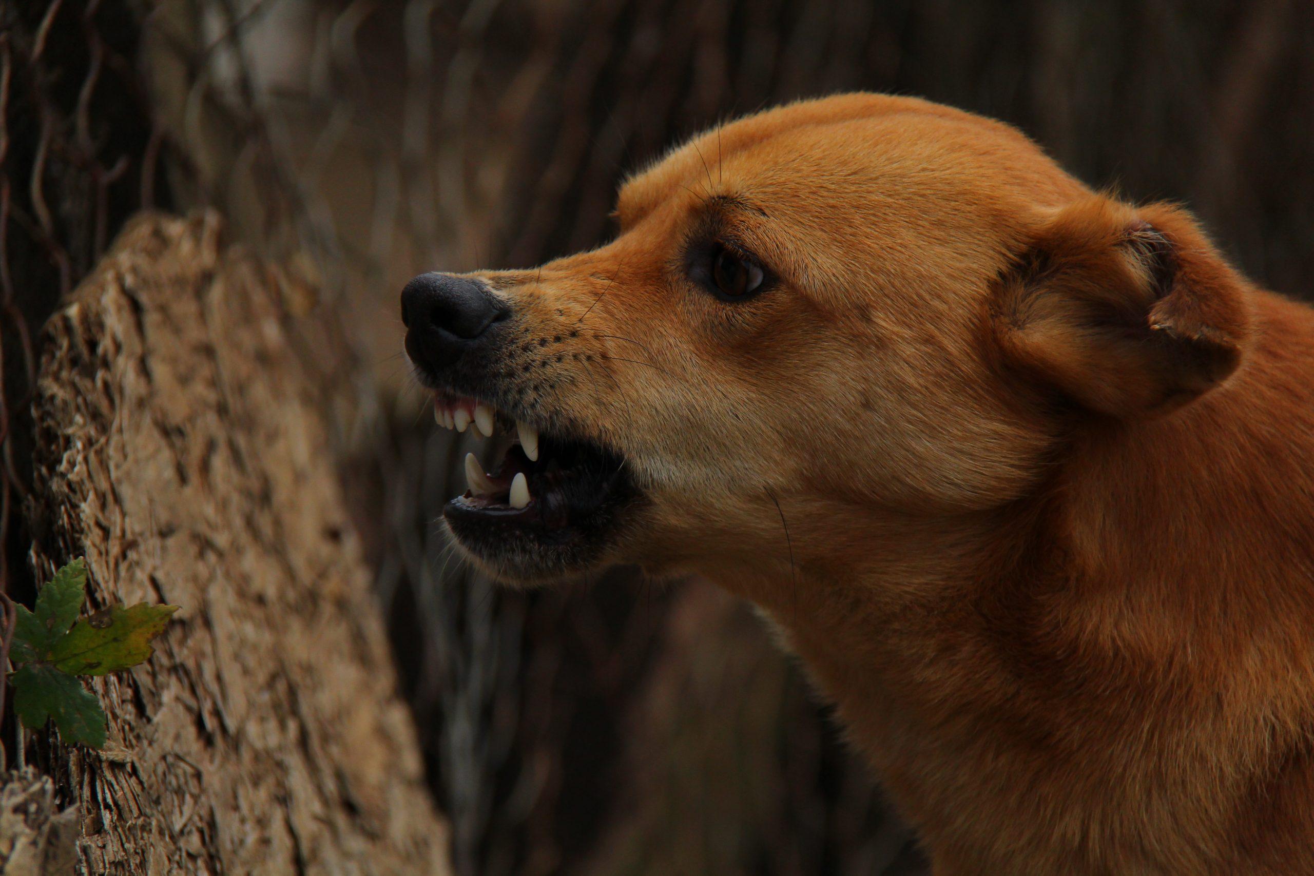 Dog Obesity Prevention Maintenance Programs